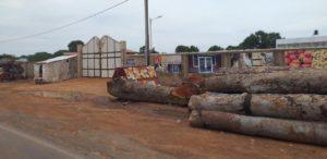Illegal Logging 2 - (C) Mustapha Manneh
