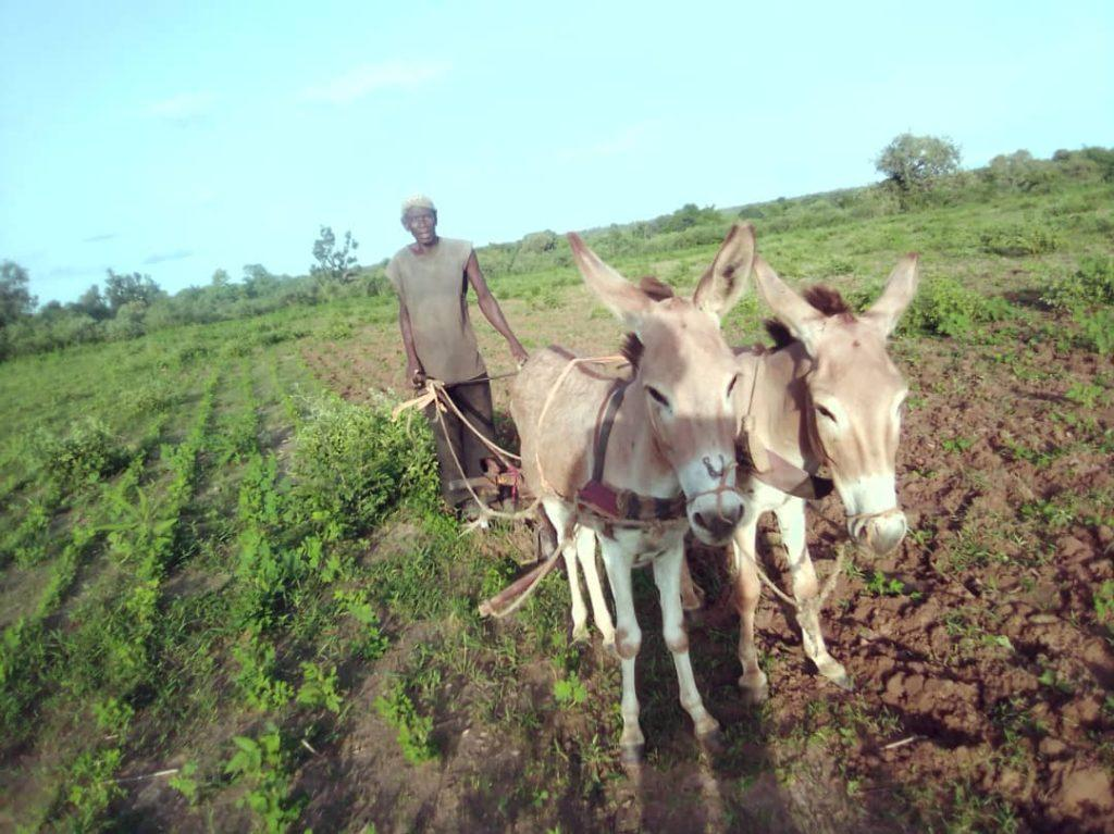 Farmer and two Donkeys